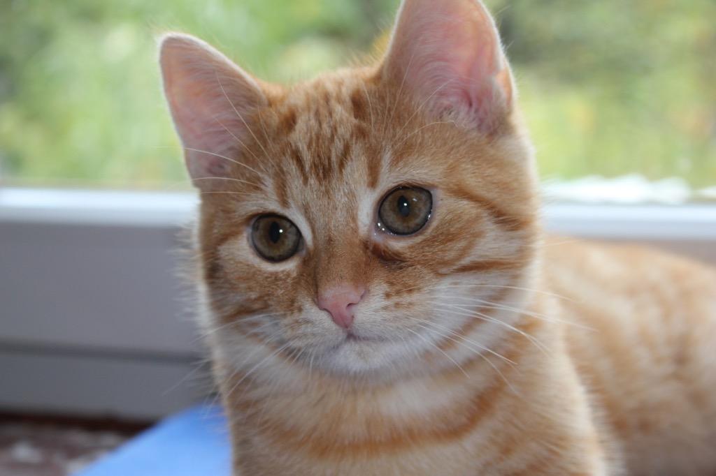 Katzenschutzverordnung 2017